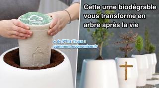 urne biodégrable vous transforme arbre