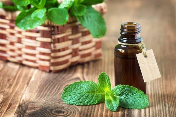 utilisation de l'huile essentielle de menthe