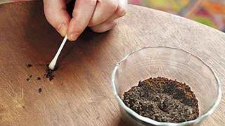 utilisations marc de cafe