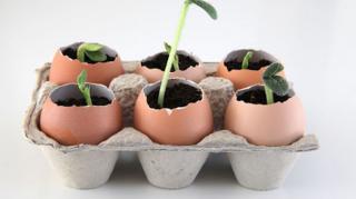 utiliser coquille oeufs comme recipient semis