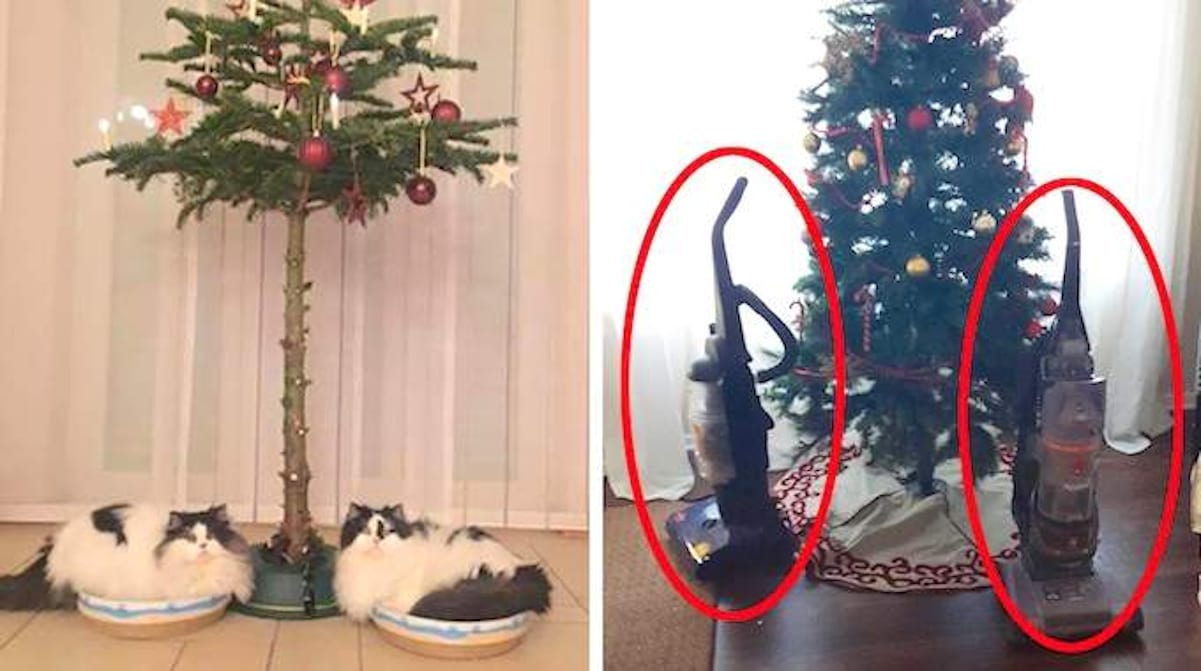 Comment Fixer Un Sapin De Noel 18 photos de gens qui ont trouvé une astuce pour protéger le