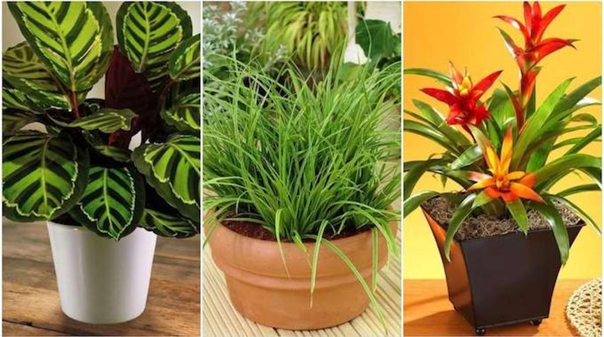 Plante D Intérieur A Faire Pousser 17 plantes d'intérieur qui poussent sans lumière du soleil.