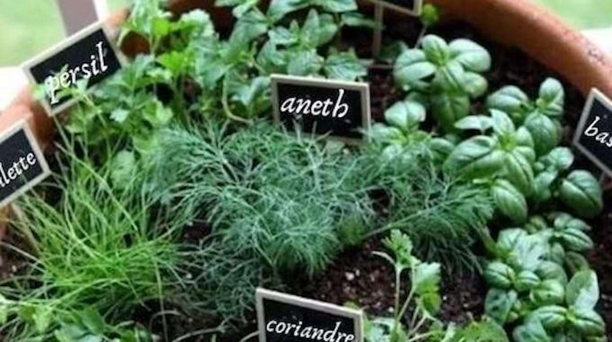 Faire Pousser Du Persil En Appartement 10 herbes aromatiques que vous pouvez faire pousser ensemble