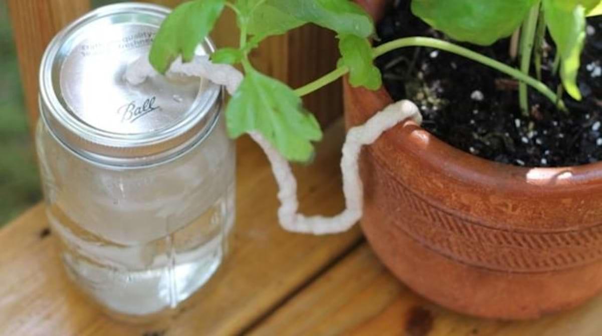 Comment Arroser Jardin Pendant Vacances l'astuce indispensable pour arroser vos plantes pendant