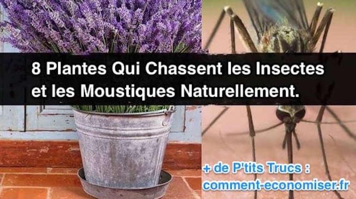 Comment Éloigner Les Mouches À L Extérieur 8 plantes qui chassent les insectes et les moustiques