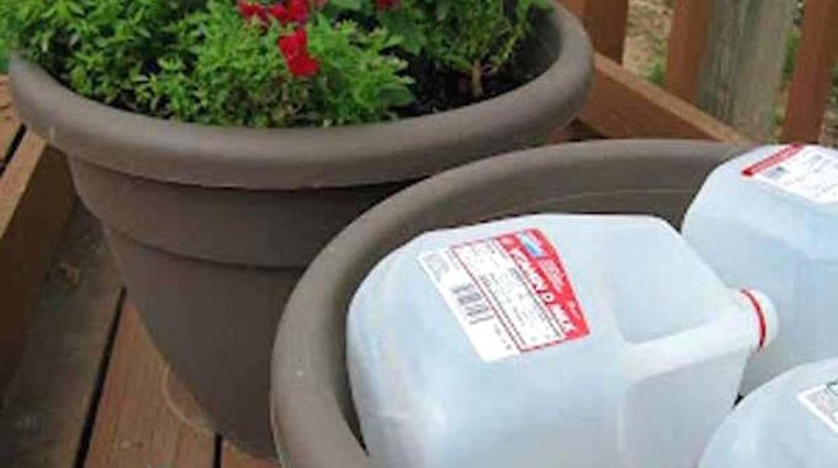 Pot De Fleur Haut Pas Cher l'astuce toute simple pour Économiser du terreau dans vos