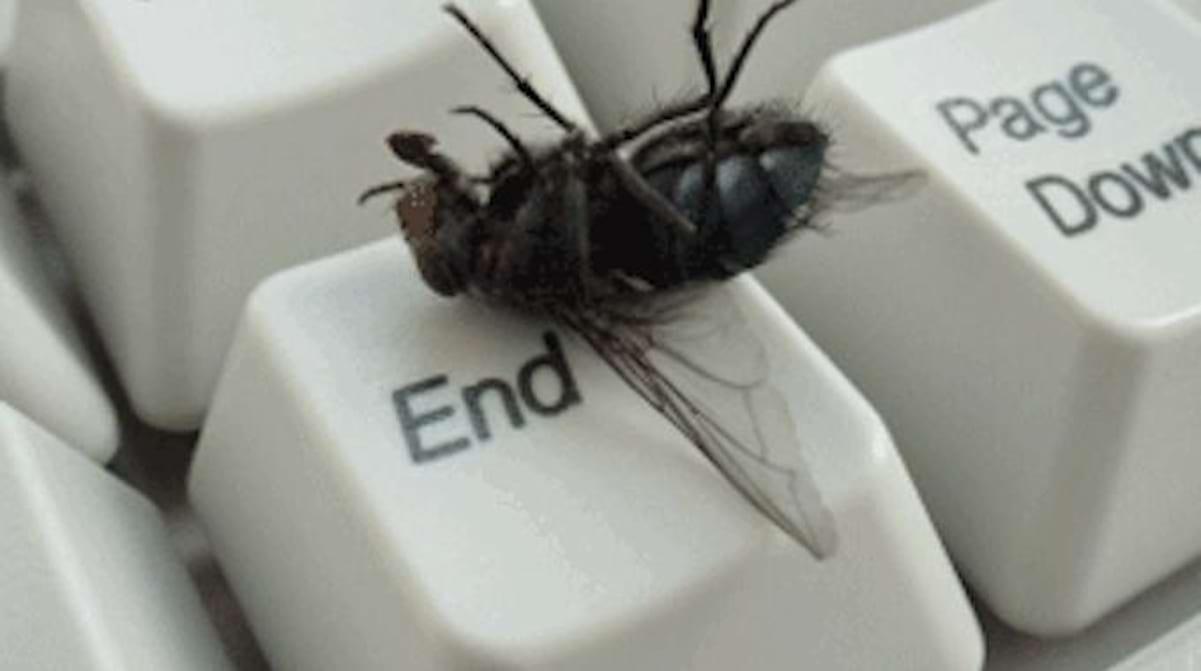 Remede De Grand Mere Contre Les Moucherons Dans La Maison comment je fais fuir les mouches avec une astuce toute simple.