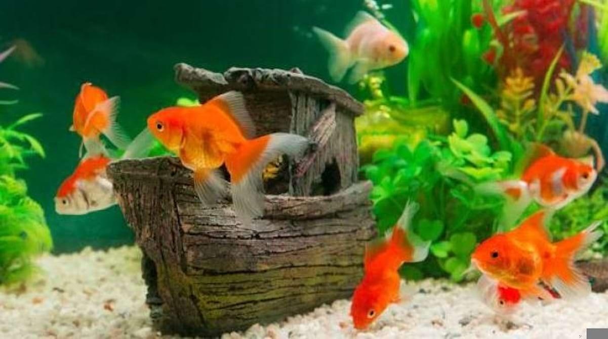 Fabriquer Une Tour A Poisson 3 astuces simples et Économiques pour un poisson rouge heureux !