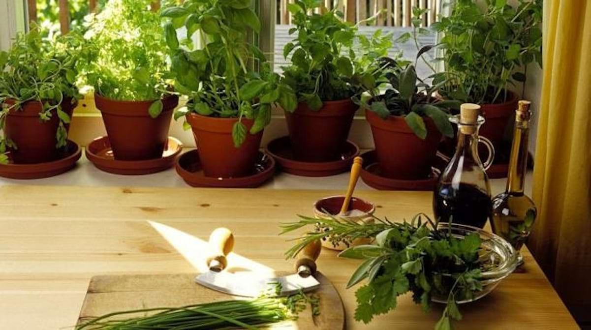 Plantes Aromatiques Sur Terrasse comment cultiver les plantes aromatiques en pot chez soi.