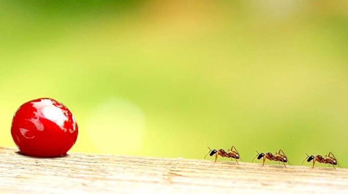 Eloigner Les Fourmis Au Jardin mes 5 astuces pour repousser naturellement les fourmis de la