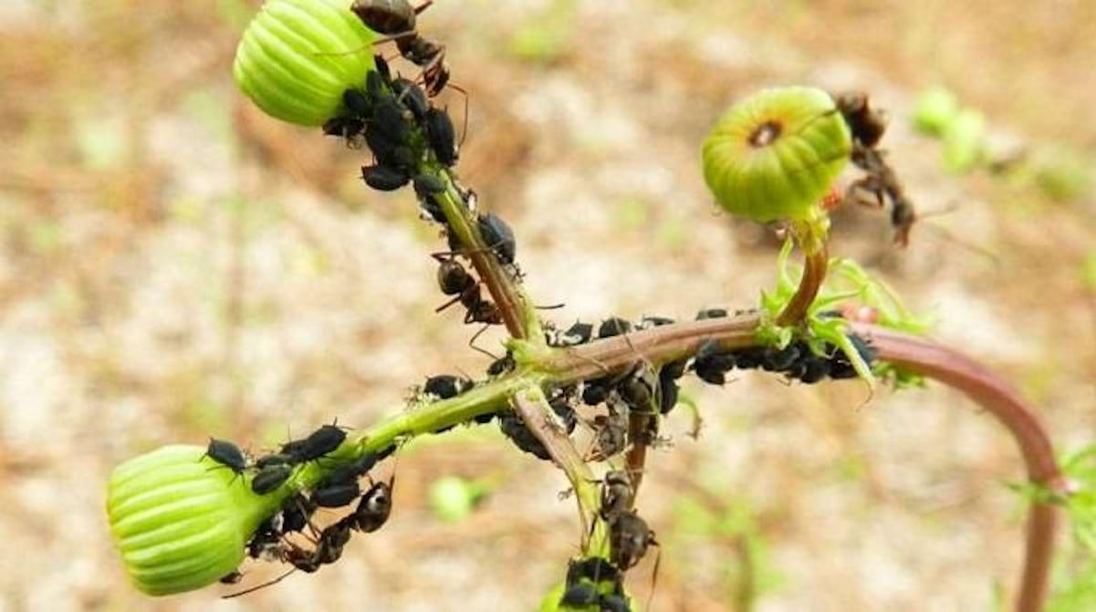 Eloigner Les Fourmis Au Jardin un répulsif à fourmis naturel : le marc de café.