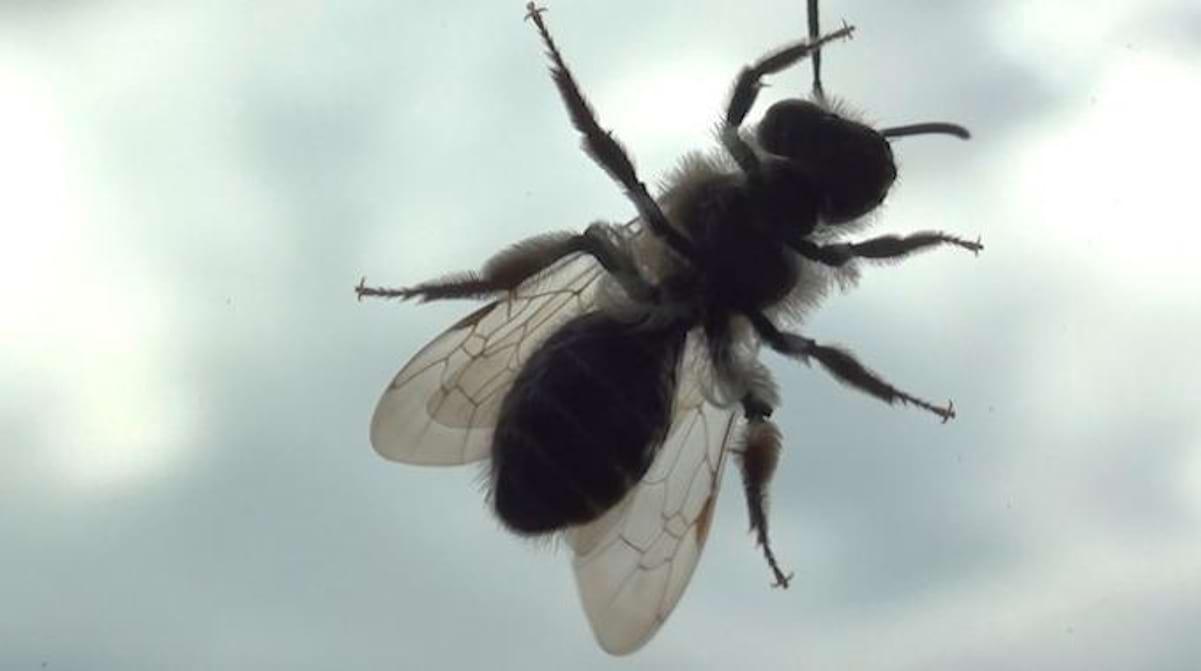 Comment Se Débarrasser De Moucherons Naturellement 5 astuces efficaces pour lutter contre les mouches.