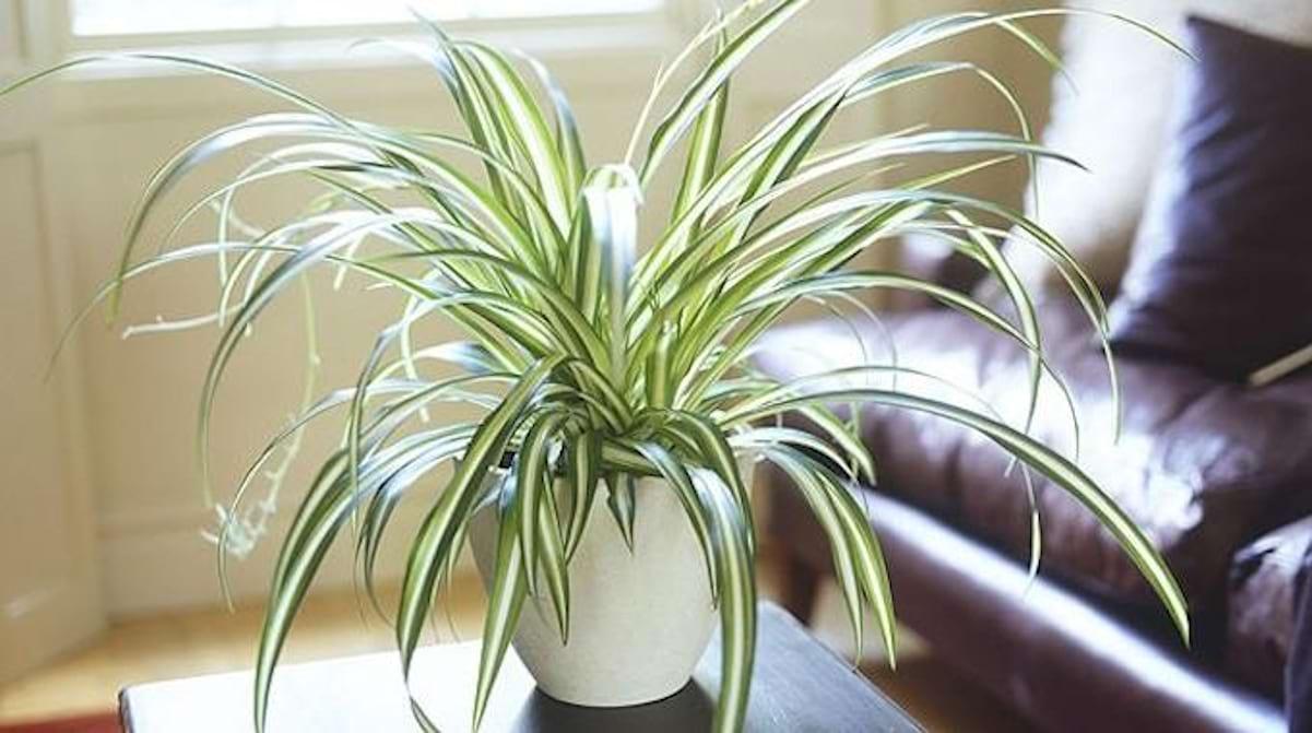 Comment Arroser Mes Plantes Pendant Les Vacances 9 plantes d'intérieur qui nettoient l'air et qui sont quasi