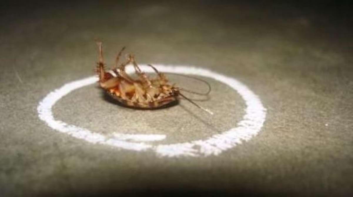 Comment Éloigner Les Fourmis Naturellement découvrez le meilleur répulsif naturel contre les blattes.
