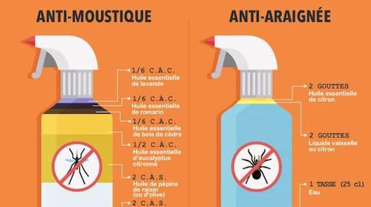 Huile Essentielle Efficace Contre Les Cafards 7 répulsifs naturels contre les insectes à l'efficacité
